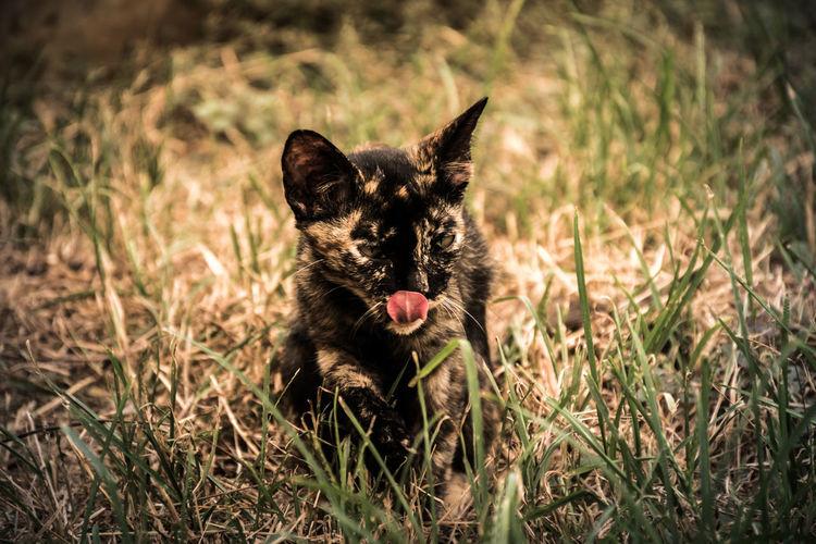 Black cat in a field