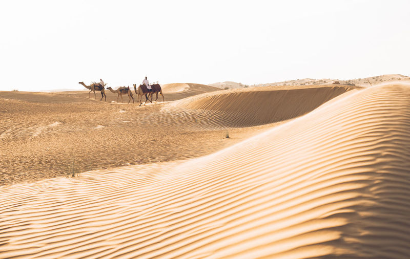 View of people riding horse in desert against clear sky