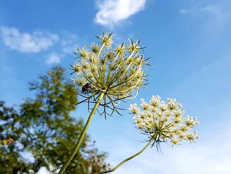 From My Point Of View Flower Nature Sky Plant Beauty In Nature Growth Cloud - Sky Low Angle View Branch Freshness Fragility One Insect Day Outdoors Blue Rural Scene Close-up