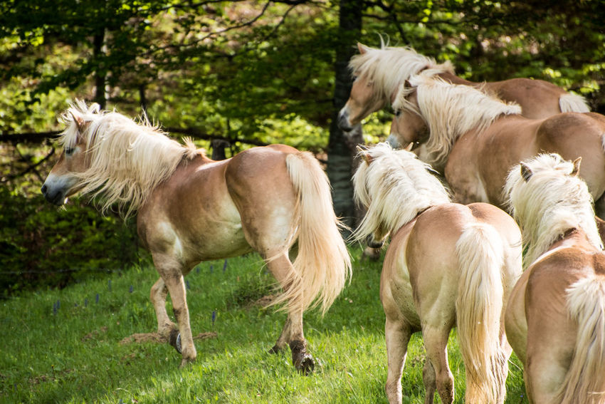 horse Animal Themes Day Domestic Animals Grass Horse Livestock Mammal Nature No People Outdoors Standing Togetherness Tree