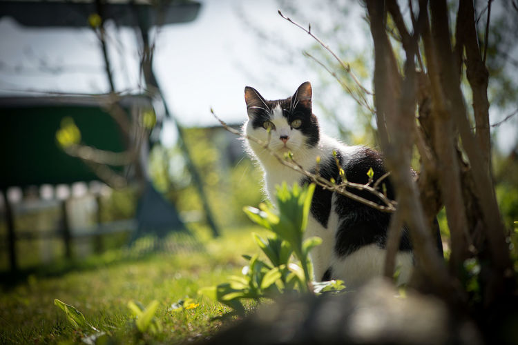Animal Background Animal Themes Domestic Animals Domestic Cat Garden Mammal Nature No People One Animal Pets Selective Focus Sitting Spring Summer