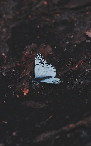 One Animal Animal Themes Animal Wildlife Animals In The Wild Animal Insect Animal Wing Beauty In Nature Invertebrate Butterfly - Insect No People Close-up Day Nature High Angle View Selective Focus Outdoors White Color Plant Part Leaf Butterfly