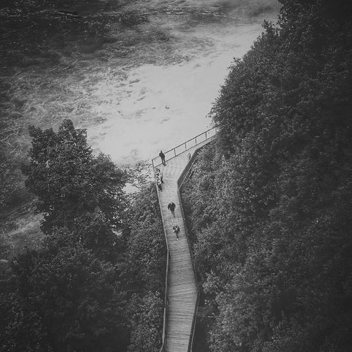 Monochrome Photography Tree Footpath Green Color Day Sea Outdoors Person Tranquility Remote Lush Foliage Scenics Green Tranquil Scene Rhinefalls Switzerland