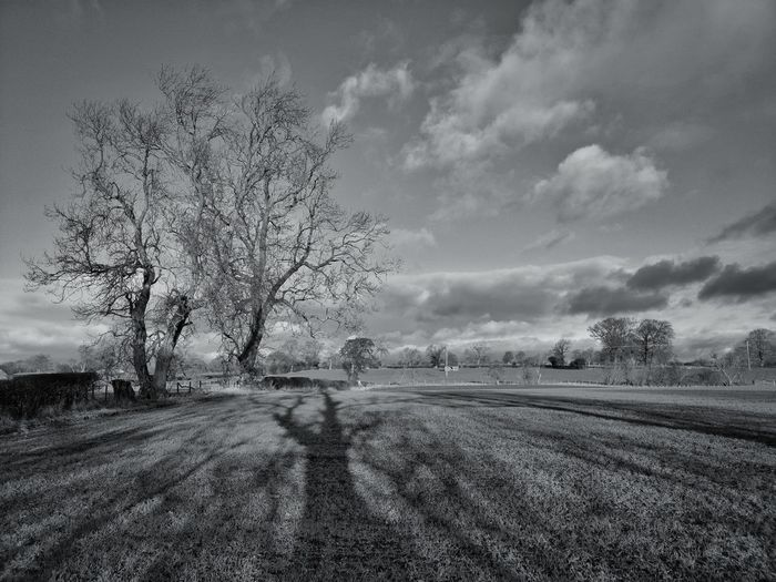 Blackandwhite Photography Trees And Sky My Point Of View Sky And Clouds Blackandwhite Black & White Blackandwhite Photography Bnw_collection Eye4photography  EyeEmBestPics Trees Nature Photography Hiking Skyporn EyeEm Best Shots Clouds And Sky Nature_perfection Huaweiphotography Huawei Mate 20 Pro Mobilephotography Mobile Photography Sky Tree Cloud - Sky Landscape Plant Field Scenics - Nature Tranquility Day