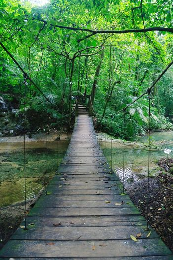 On the road Bridge Intothewild Woods Tropical Forest Green Peace Travel Destinations Travel Photography Summertime Summer Exploration Top Destination Tree Water Green Color Grass