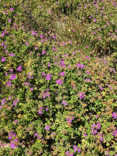 Wildflowers and vegetation on a beach. — Shoalwater Bay, Rockingham, Western Australia. Warm Rockingham Shoalwater Bay Outdoors Fragility Freshness Beauty In Nature Plant No People Summer Nature Growth Flower Day October 2016 Western Australia Beach Sunny Colorful Color Green Pink Vegetation Wildflowers