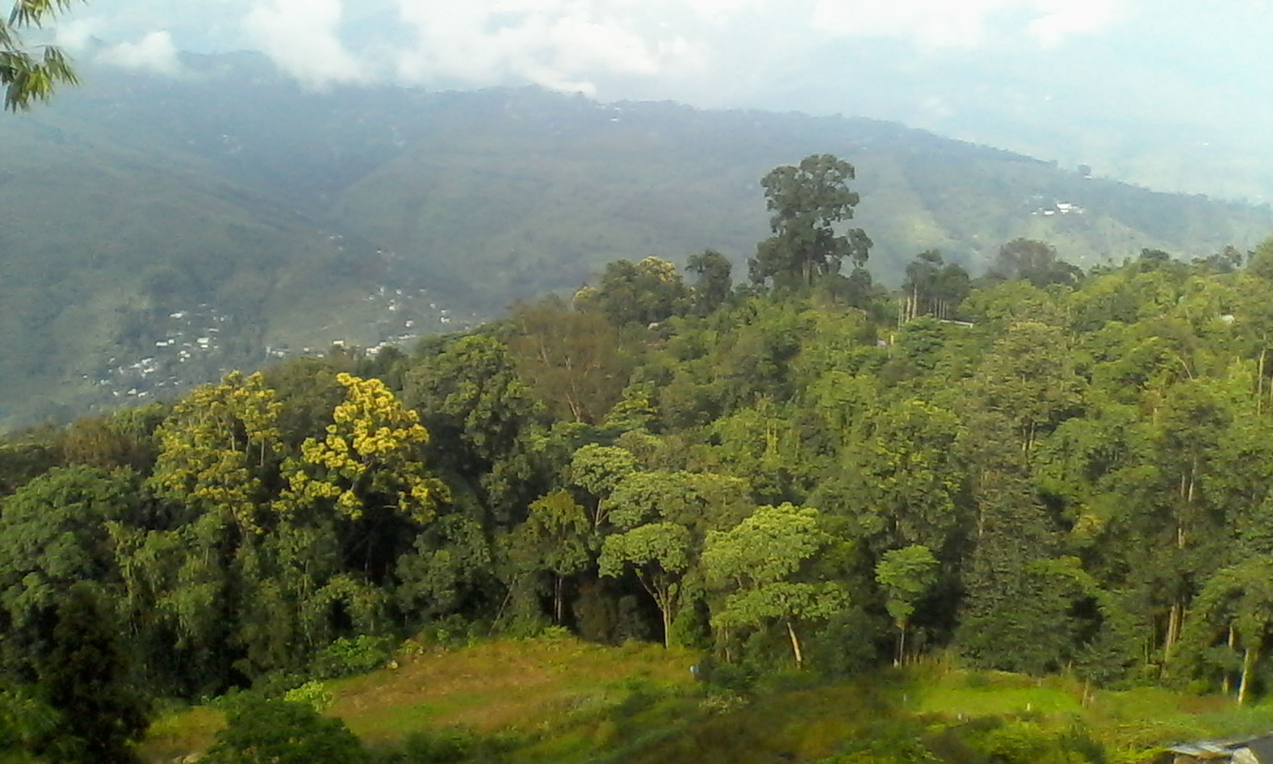 plant, tree, environment, forest, landscape, scenics - nature, land, vegetation, beauty in nature, mountain, nature, valley, natural environment, rainforest, green, hill station, jungle, growth, tranquility, wilderness, fog, no people, sky, field, ridge, lush foliage, foliage, mountain range, rural scene, outdoors, tranquil scene, non-urban scene, agriculture, day, plateau, tropical climate, cloud, travel, plantation, social issues, rural area, meadow, crop