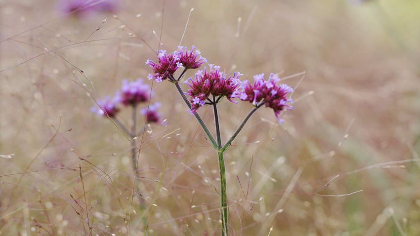 Flower Nature Beauty In Nature No People Wildflower Gegenlicht Sommerwiese My View Save The World Gräser Und Blüten Sommertag Gräser Flower And Grasses Sommer 2017 Flower Head