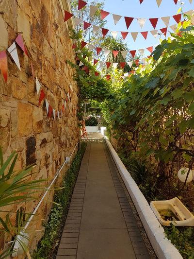 Green walkway Tree Growth Plant Walkway Outdoors