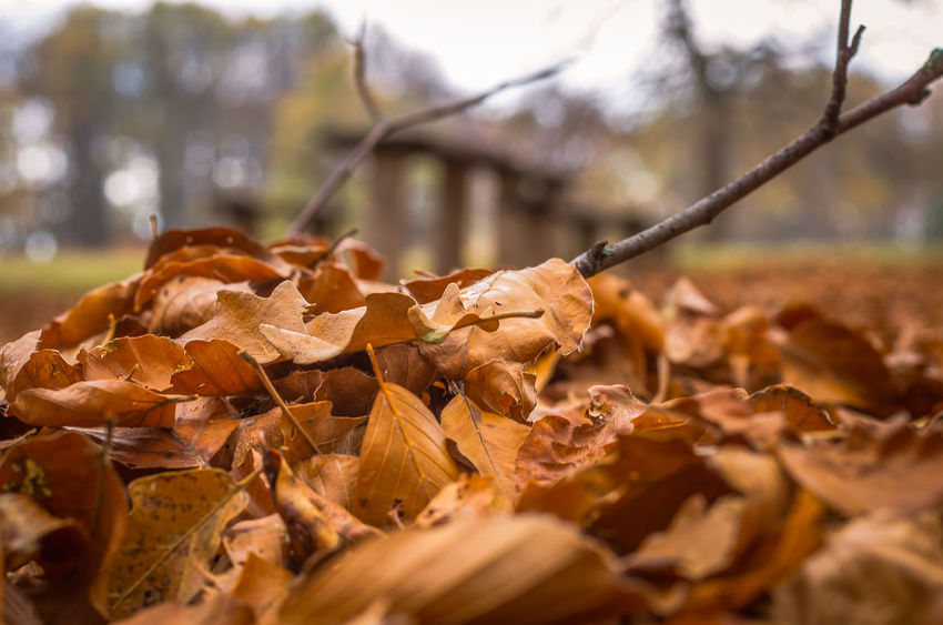 Exploring the small mountain town of Krushevo in Macedonia Autumn Beauty In Nature Change Close-up Day Dead Plant Dried Plant Dry Fragility Leaf Maple Nature No People Outdoors Tree