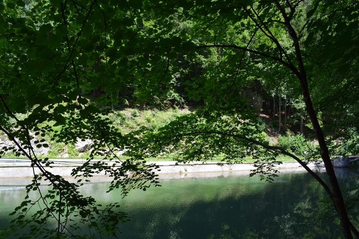 Austria Green Nature Beauty In Nature Branch Day Foliage Forest Green Color Growth Lake Land Myrafällle Nature No People Outdoors Plant Reflection Scenics - Nature Summer Tranquil Scene Tranquility Tree Water Waterfall
