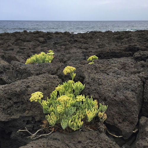 Plants growing on rocks by sea against sky