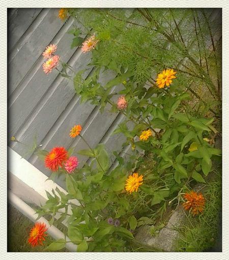 Summer Flowers Au Natural
