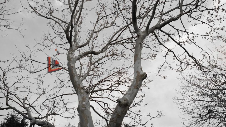 Lost kite Tree Branch Perching Flower Bird Bare Tree Full Length Sky
