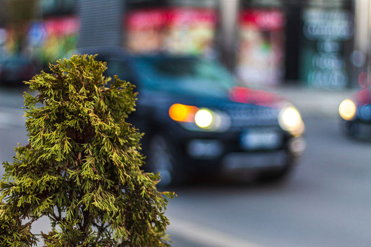 Tree on the street Bokeh Transport Road Bulgaria Tree Travel Street Car Green Street Photography Small Tree Cars Leafs Traffic Burgas  Transportation Motor Vehicle Mode Of Transportation City Land Vehicle Plant Focus On Foreground No People Close-up Outdoors Nature Illuminated Day Green Color Selective Focus EyeEm Best Shots The Street Photographer - 2019 EyeEm Awards