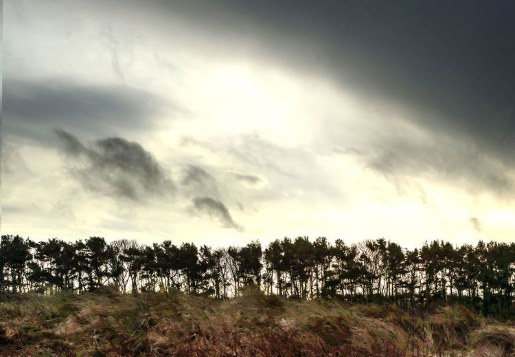 Treeline Sky