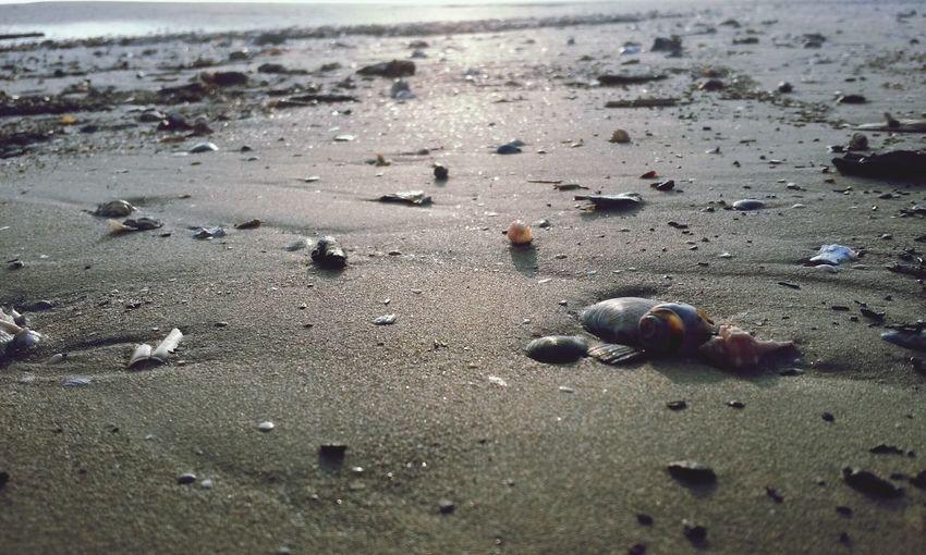 High angle view of seashells on sandy beach