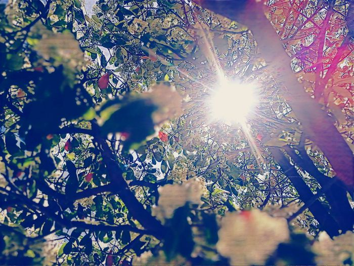 Brixton White Blossoms #2 White Colorful Nature Graphic Nature Textures London Brixton EyeEm Best Edits EyeEm Flower EyeEm Nature Lover United Kingdom Crowd Sunlight Tree Close-up Sky Shining Pixelated Streaming Sparks Artificial Intelligence Exploding Silhouette Sun Sunbeam