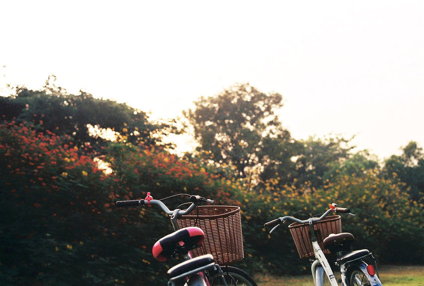 Two bicycle in the garden, Film scanned Bicycle Day Field Film Grain Film Photography Film Scanned Filmcamera Garden Grass Growth Landscape Leisure Activity Lifestyles Nature Outdoors Paris Relaxation Rural Scene Sky Spring Style Tew Tranquility Transportation Tree