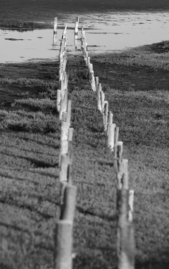 Surface level of wooden posts on beach