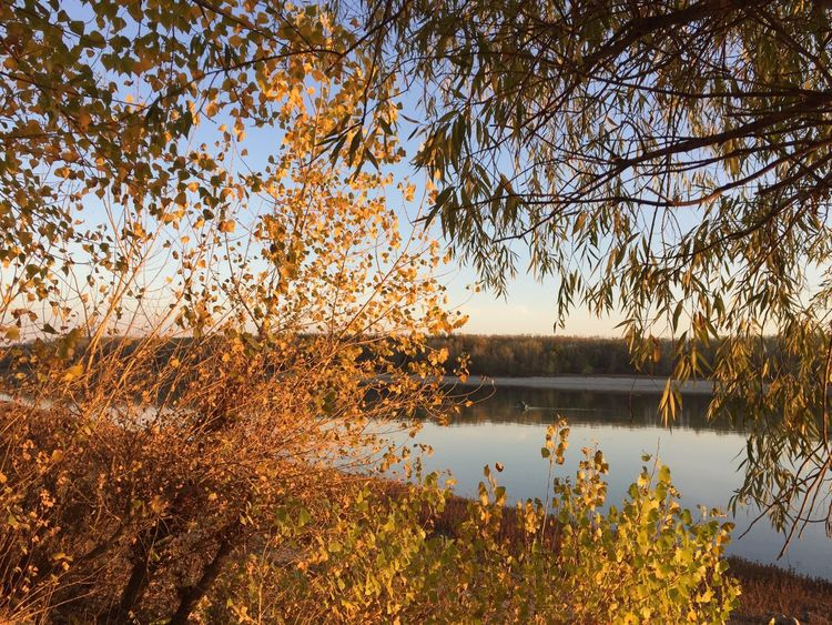 Autumn colors on the Danube river Autumn Leaves Autumn colors Autumn Fall Colors Fall Leaves Danube Romania Water Tree Plant Sky Reflection Tranquility Beauty In Nature Nature Scenics - Nature No People Tranquil Scene Idyllic Outdoors