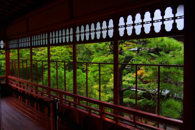 北方文化博物館 Japan Old Nigata History Window Green Tree Metal Grate Architecture Green Color