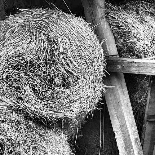 Taking Photos Relaxing Samsungphotography Nature Samsung Iggermany Naturelovers Nature Photography Igers EyeEm Best Shots Igbest EyeEm Nature Lover Nature_perfection Blackandwhite Bwigers Blackandwhite Photography Black & White Black&white