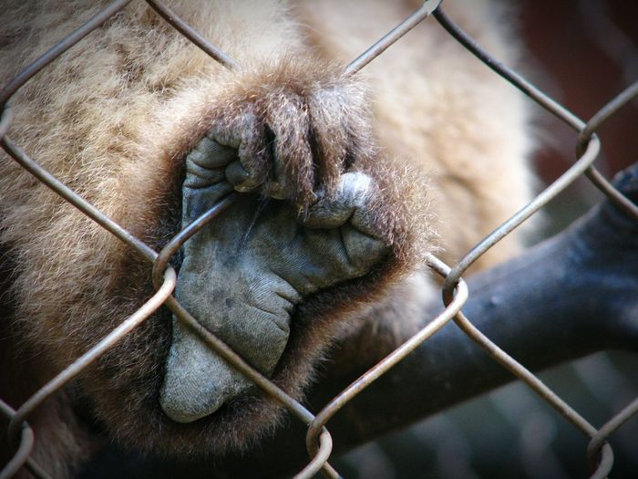 Close-up of monkey in cage