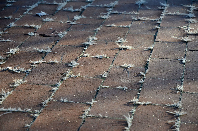 A Touch Of Frost Grass In The Cracks Paving Paving Bricks