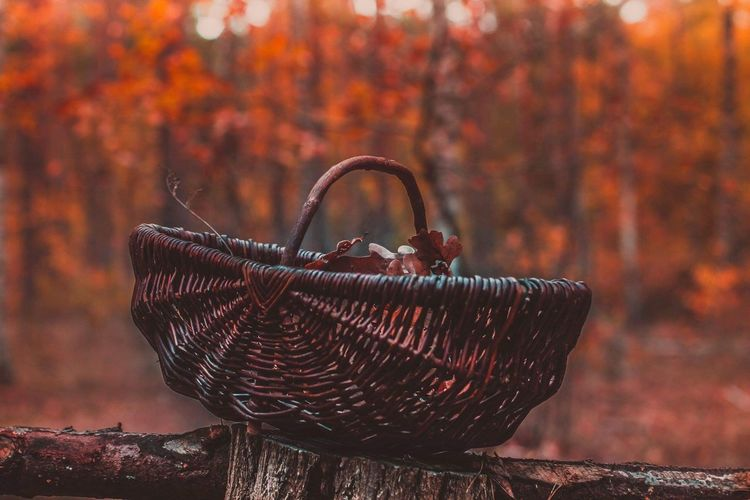 Close-up of autumn leaves in basket