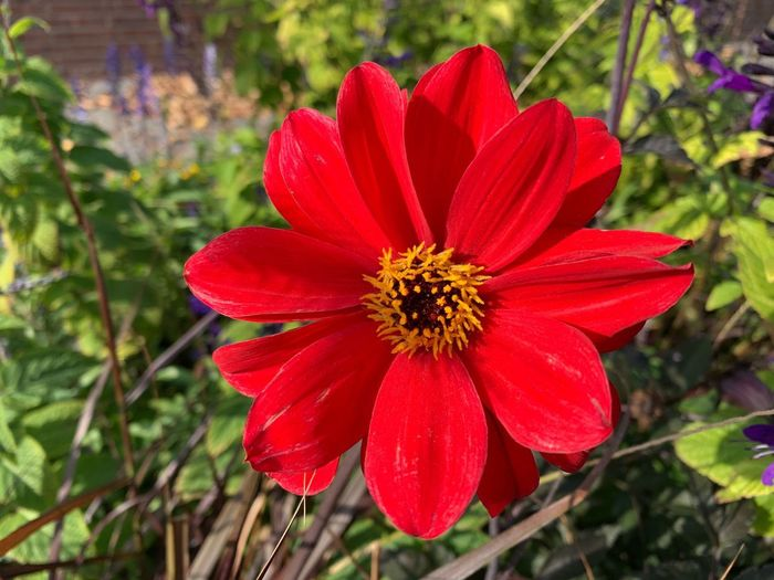 Blumen im