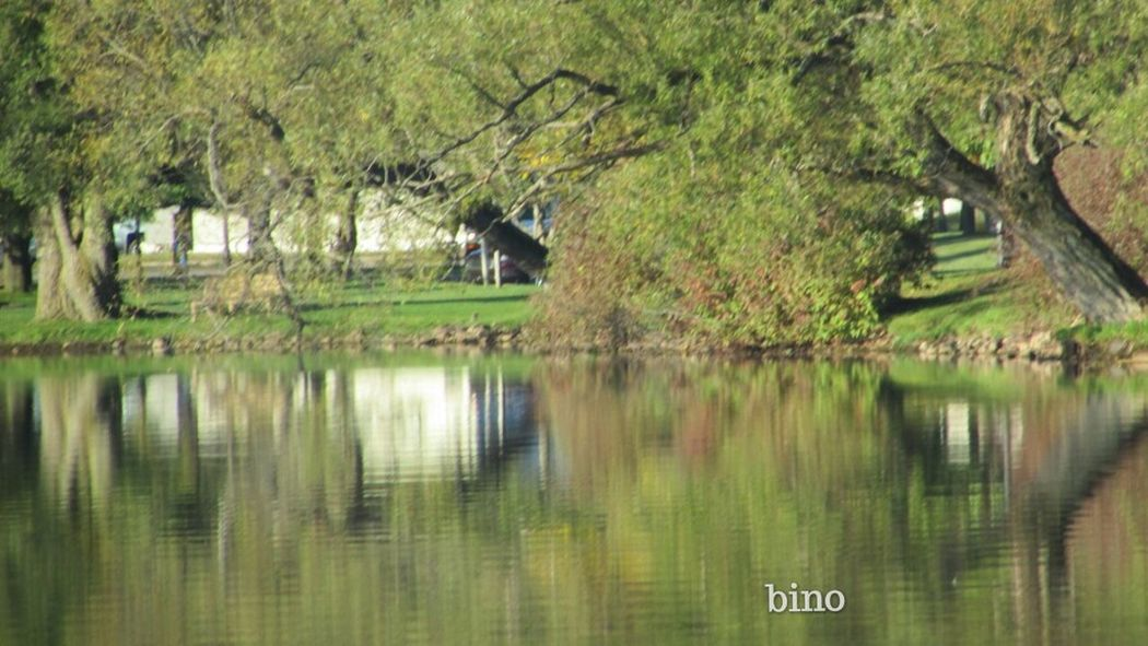 Shoreline Beauty Early Morning Around The Lake Very Green Awesome Reflection Lake Cadillac Pure Michigan