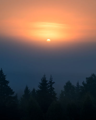 Sun is rising behind fog in Torronsuo national park, Finland Finland Moment Of Silence Morning National Park Tranquil Atmospheric Mood Beauty In Nature Blue Dawn Dusk Fog Foggy Forest Nature No People Outdoors Scenics Silhouette Sky Sun Sunrise Sunset Tranquil Scene Tranquility Tree