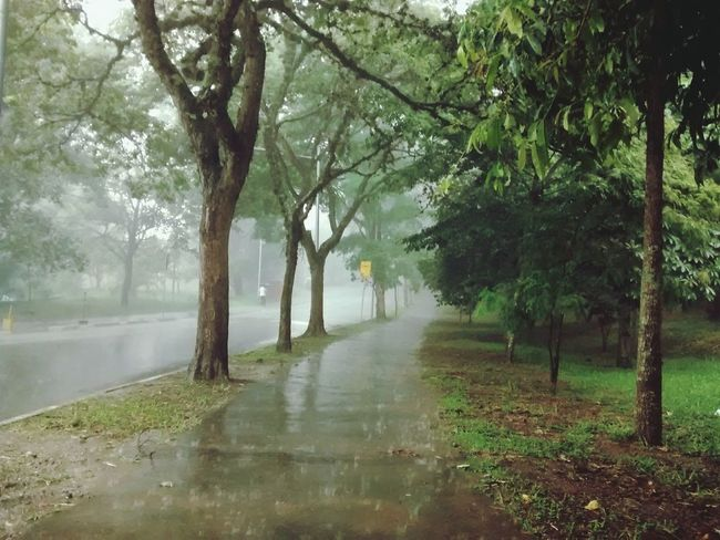 Storm Rain Fog Naturelovers Getting Inspired Conected With Nature Treescollection Sound Of Life Protecting Where We Play