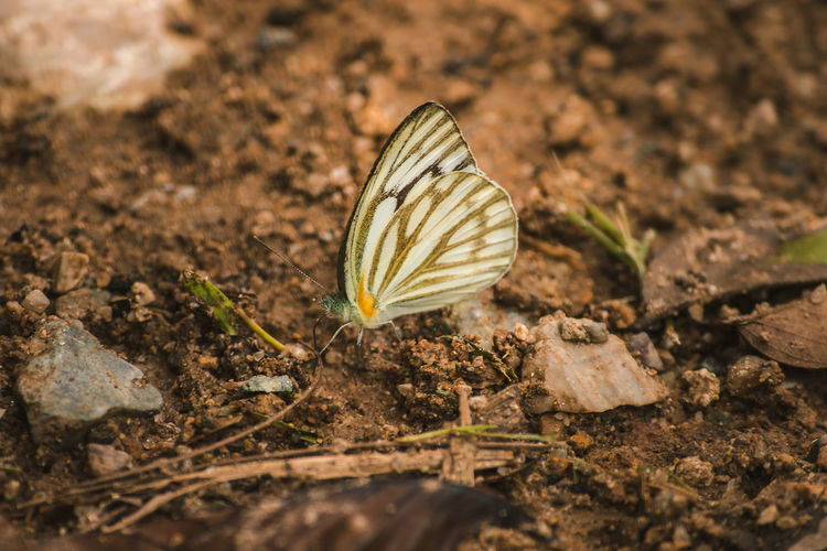 Close-up of butterfly on field