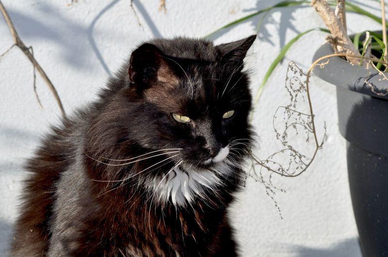 Animal Themes Domestic Cat Cat Mammal Animal Feline One Animal Domestic Pets Domestic Animals Nature Portrait