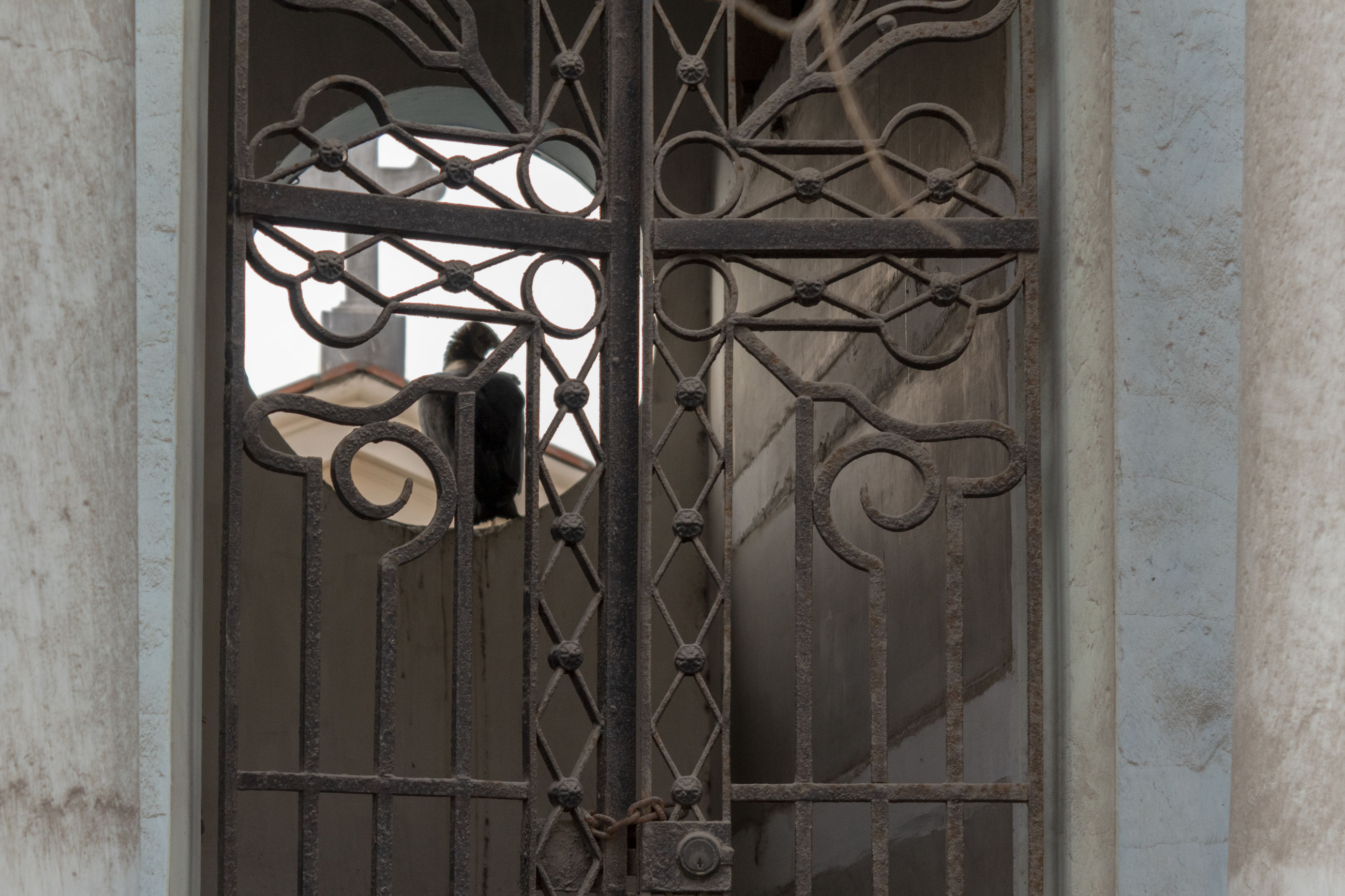 metal, no people, architecture, window, day, indoors, entrance, security, safety, door, built structure, protection, building, wall - building feature, grate, grid, old, gate, pattern, metal grate, iron - metal, wrought iron