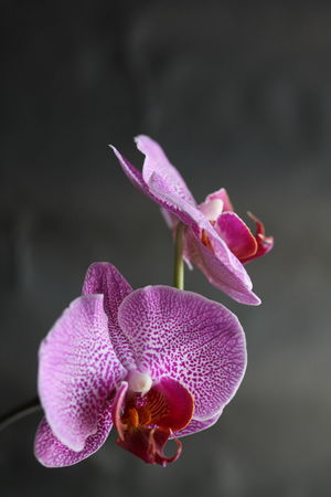 Copy Space Neutral Background Grey Magenta Colors Purple Purple Flower Purple Orchids Orchids Flower Collection Close Up Flowers Close Up Book Cover Flowers Dark Background Bookcovers Flower Flower Head No People Close-up Blooming Focus On Foreground Fragility Beauty In Nature