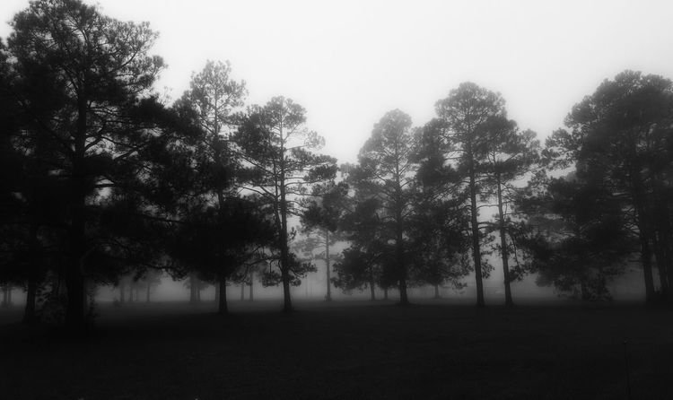 Check This Out Blackandwhite My Hobby Black And White Collection  Blackandwhite Photography EyeEm Best Shots - Black + White Landscape Foggy Morning Fog TreePorn Fog In The Trees Tree_collection  Fogporn Fog_collection