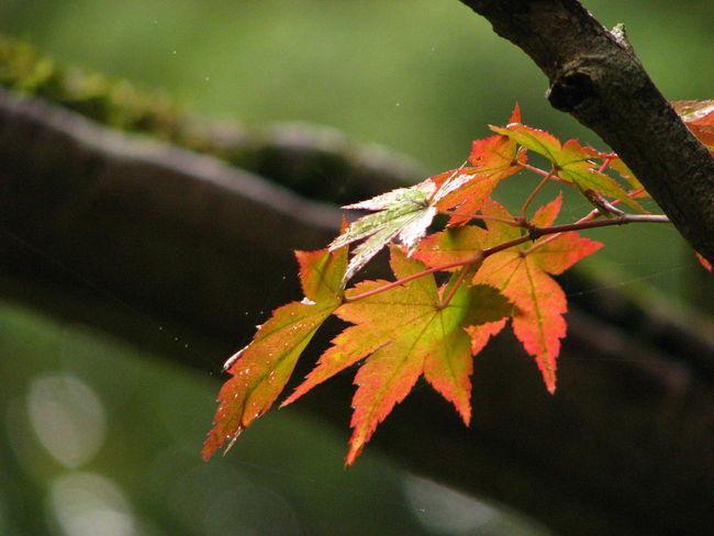 紅葉 Nature Autamn Japan