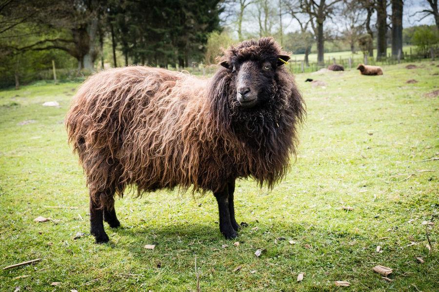 Green Color Animal Themes Animal Wildlife Animals Sheep Farm Sheeps Sheep🐑 Wild