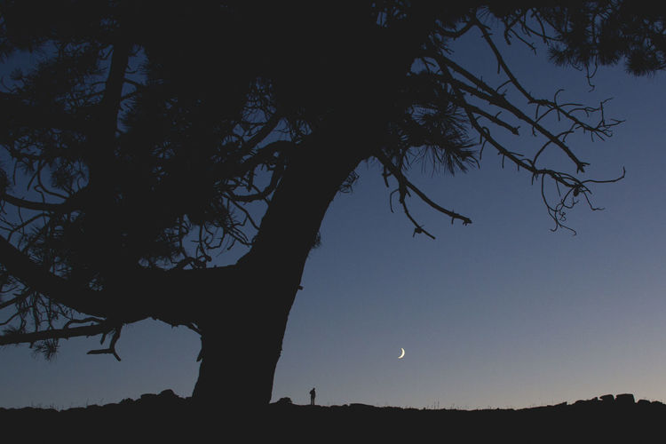 Astronomy Beauty In Nature Branch Clear Sky Growth Half Moon Landscape Low Angle View Moon Nature Night No People Outdoors Scenics Silhouette Sky Tranquility Tree EyeEm Ready