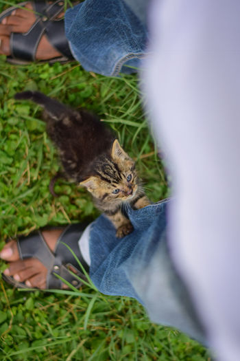 New baby kitten climbing my jeans. Cats Of EyeEm EyeEm Best Shots Care Cat Domestic Domestic Animals Domestic Cat Feline Hand Human Body Part Human Hand Kitten Kittens Of Eyeem Low Section Mammal One Animal People Pet Owner Pets Plant Real People Selective Focus Vertebrate