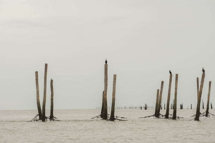 Birds Day Nature No People Outdoors Sea Sky Water Wooden Post
