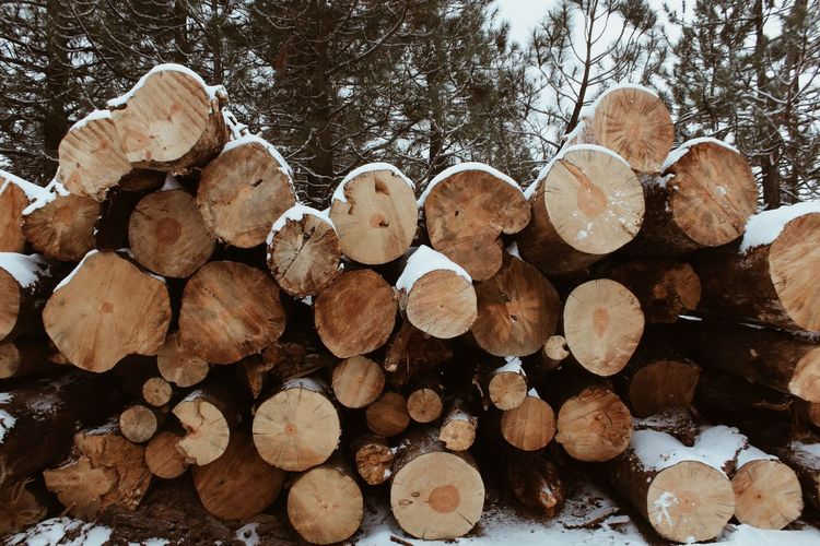 Backgound Timber Log Stack Woodpile Lumber Industry Wood - Material Heap Large Group Of Objects Close-up Nature Tree Ring Outdoors Tree Day