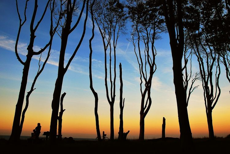 Silhouette of trees against clear sky
