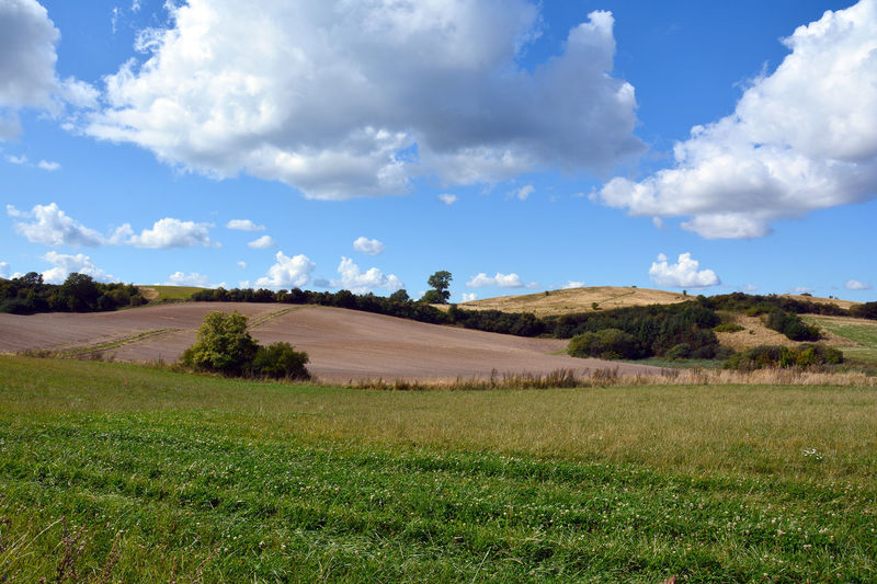 Late summer fields Clover Denmark Farmland Fieldscape Hills Late Summer Late Summer Colours Beauty In Nature Cloud - Sky Countryside Day Field Grass Landscape Nature No People Outdoors Rural Scene Scenics Sky Tranquil Scene Tranquility Tree