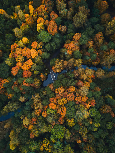 Aerial view of footbridge over river in forest during autumn