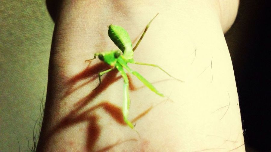 """""""Who are you?"""" """"Rather than that, where am I?"""" Summer2014 Japan EyeEm Nature Lover Night On The Planet Photo"""