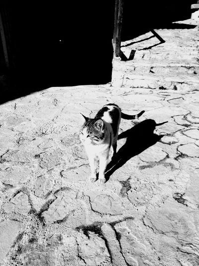 out. daylight Hi! Hello World Enjoying Life StreetSpirit Taking Photos Hanging Out Catlovers Traveling Cat Monogram
